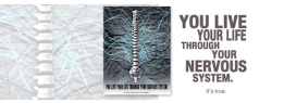 We live our lives through our nervous system